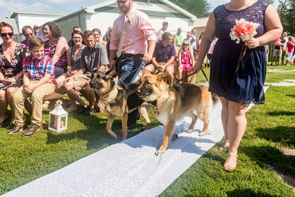 687Avon-Wedding-Country-Dogs.JPG