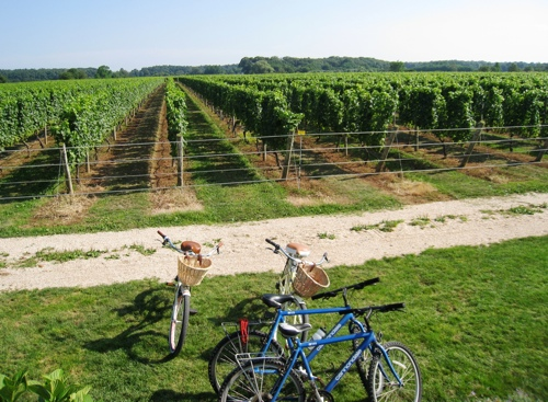 Corey-Creek-Vineyard-bike.jpg