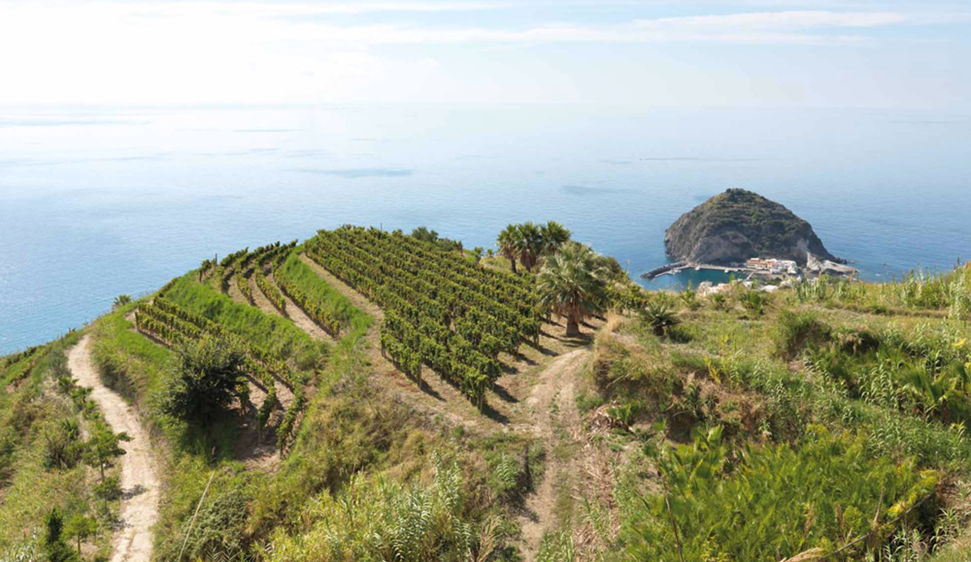Visit to a Vineyard - Tour of the Vineyard and Wine Cellar, Wine Tasting with Anitpasto, Bruschetta or Similar Appetizer, Winery Museum visit.Additional options include: stay the day at the vineyard and paint, do yoga or meditate.