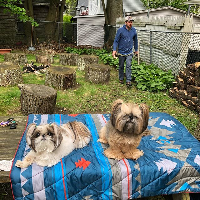 Chillin' in the backyard of the art studio as Bri moves the firewood and cleans up the backyard. ❤️☀️🐶🐶😎 #shihtzus #shihtzu #shihtzusofinstagram #portwashington #pdub #artstudio #artdogs #soulshine #soulshineartstudio #magicalbackyard #ilovemydogs