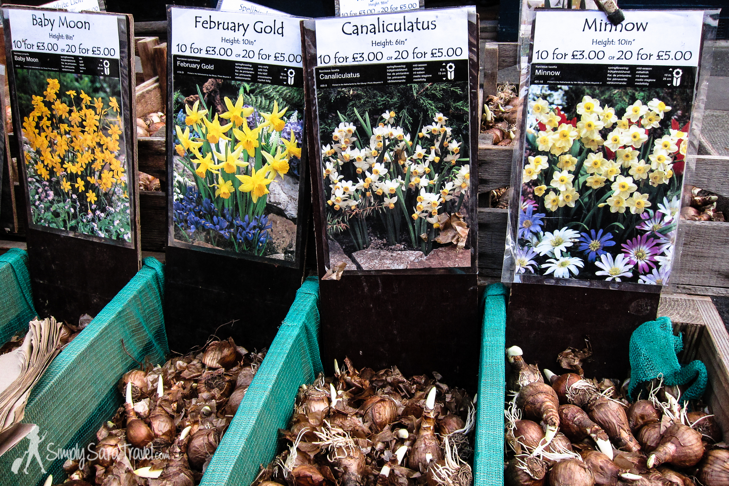 There were lots of flower bulbs too for those with a green thumb.