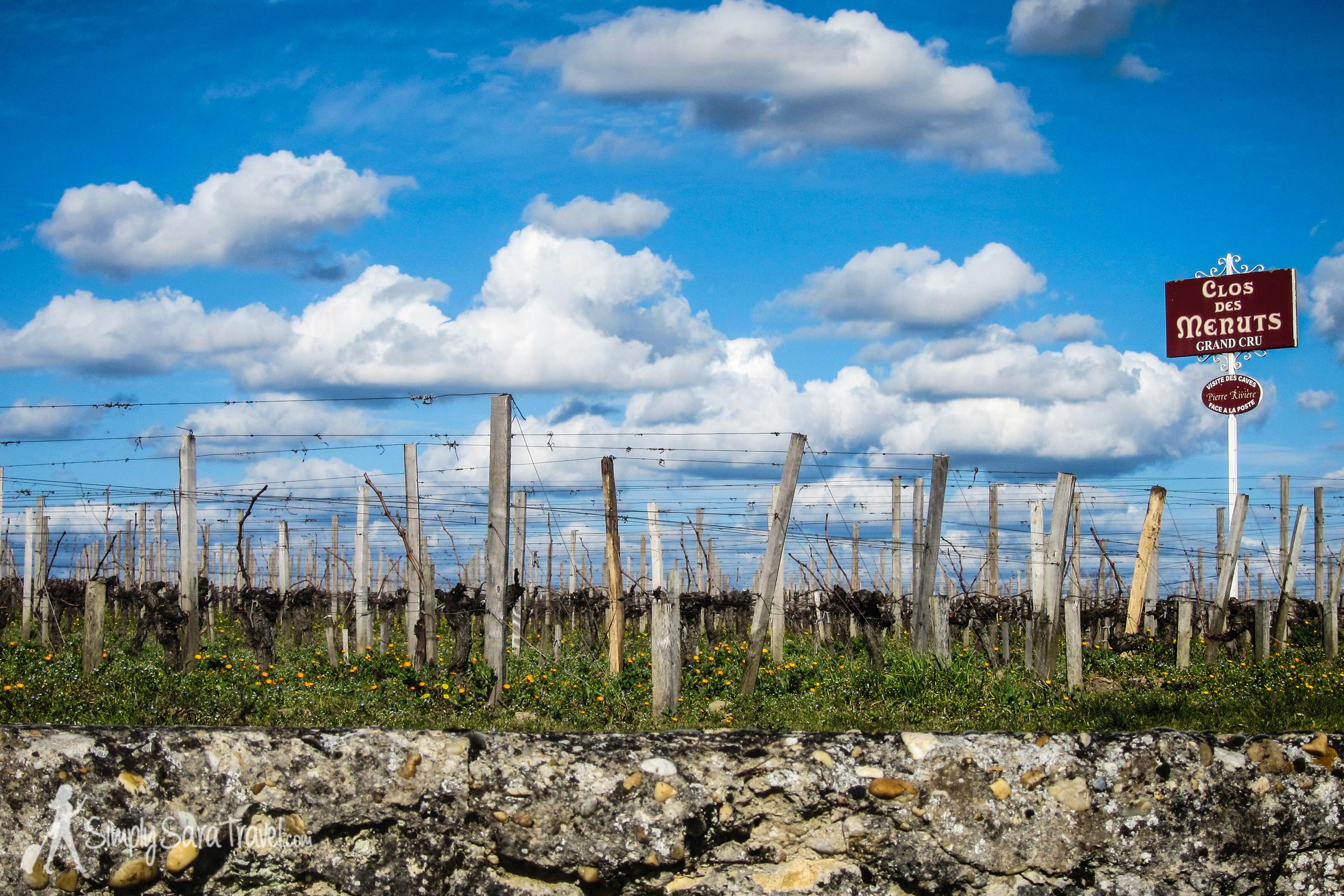 Vineyards inSaint-Émilion