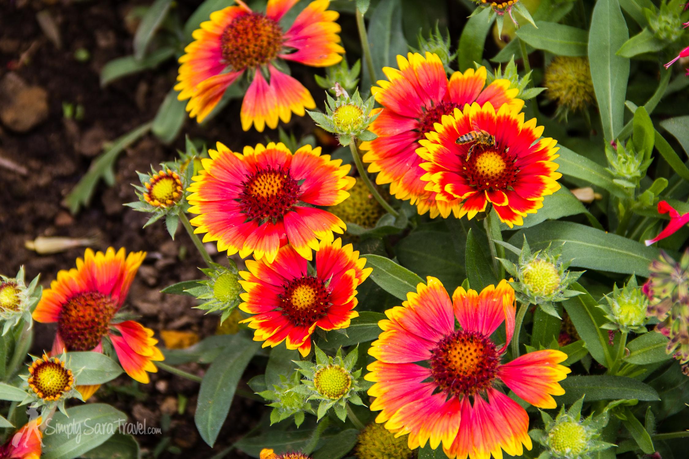 Bright flowers at the Jardin des Plantes, Paris