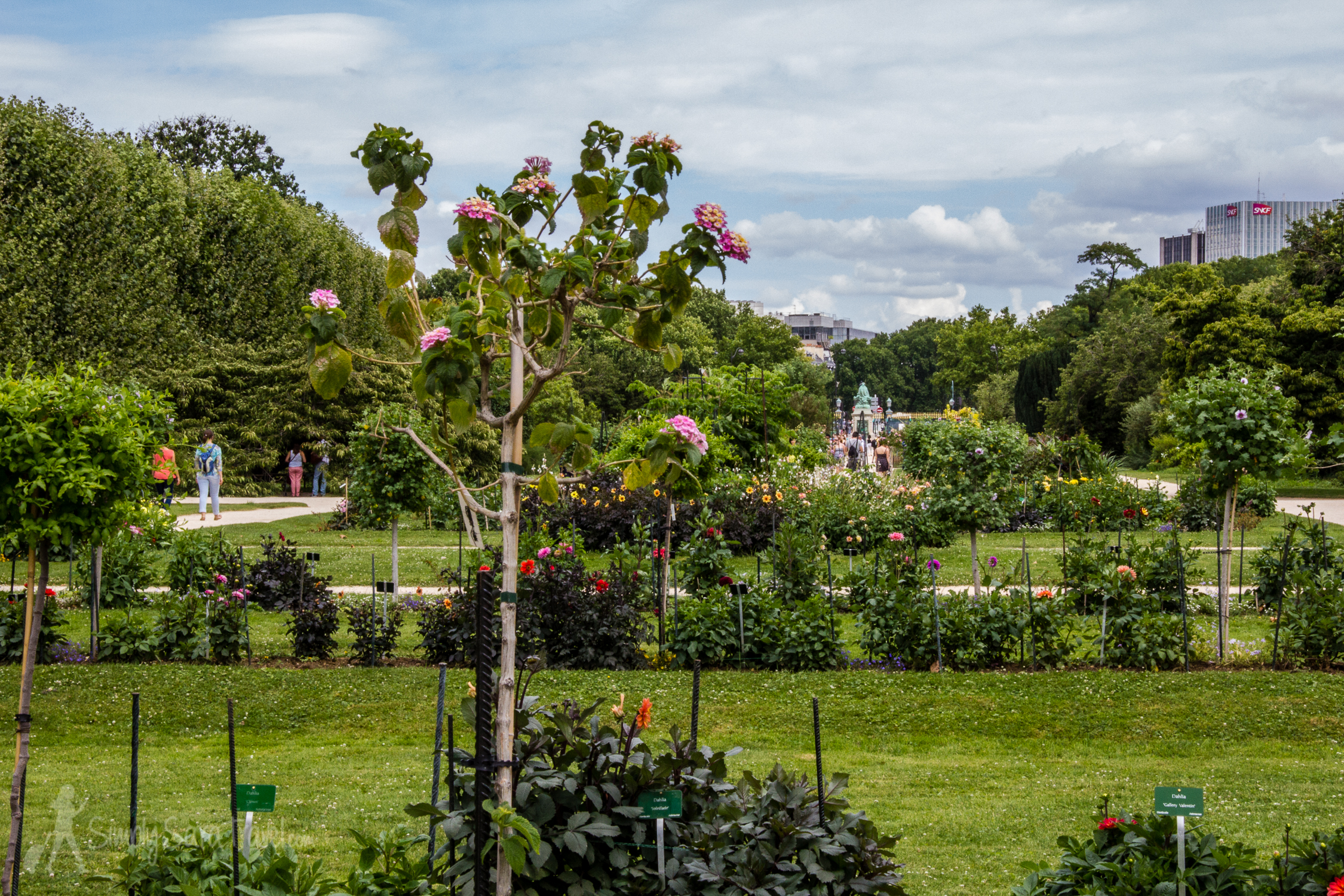A view of the gardens looking north towards the Seine