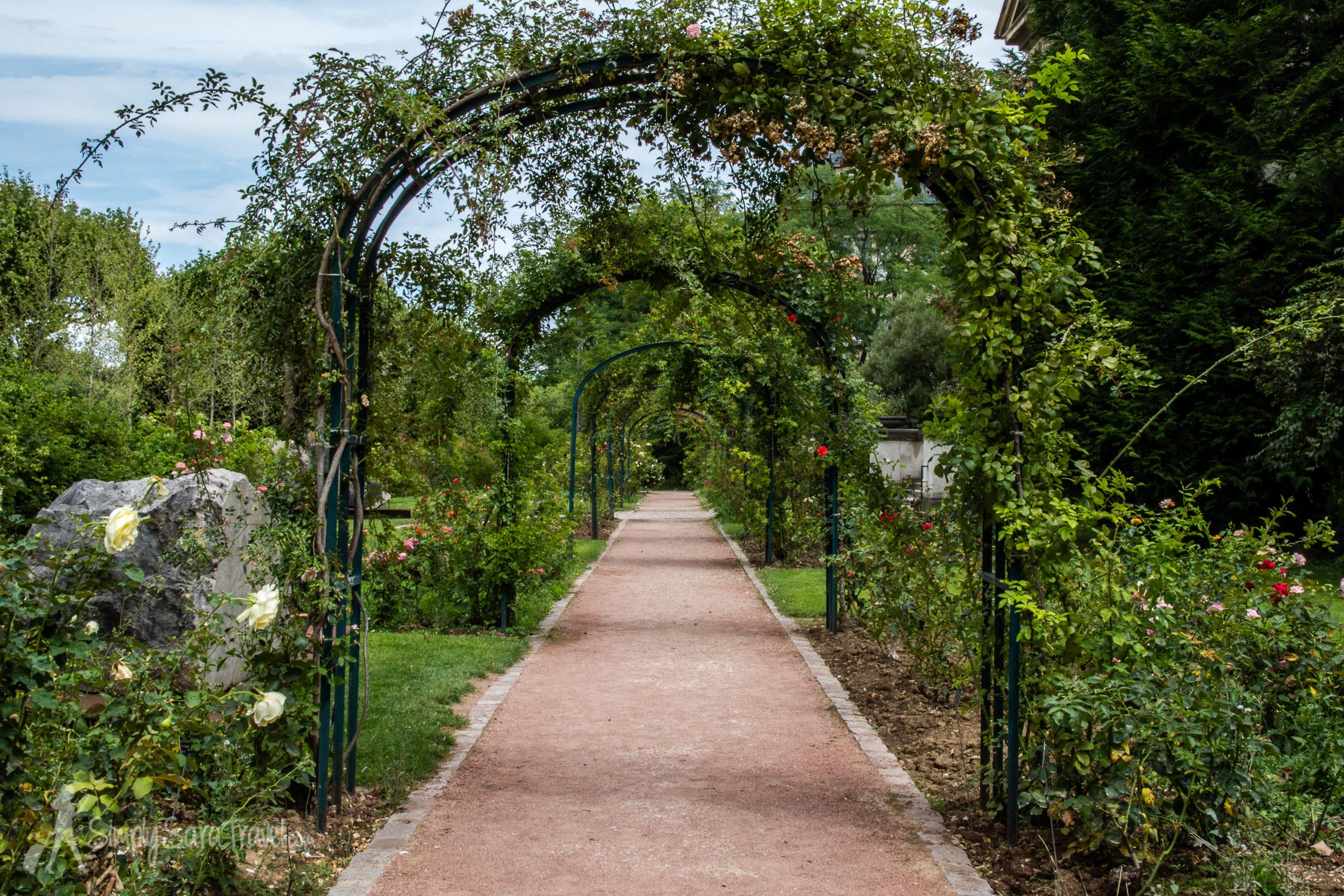 Path of Roses in the Jardin des Plantes, Paris