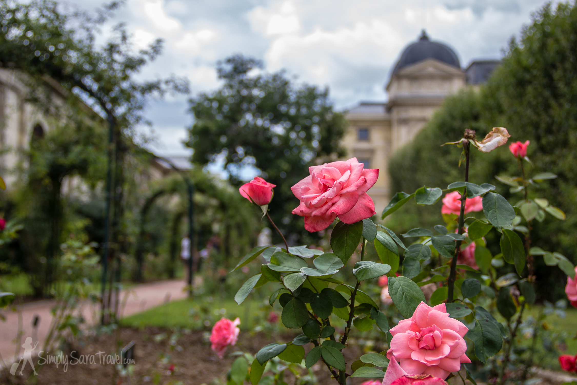 Roses at the Jardin des Plantes, by the Natural History Museum, Paris