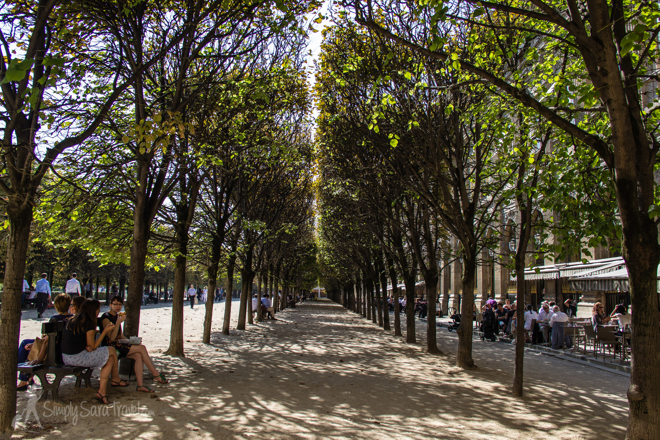 The trees of the  Jardin du Palais Royal hanging onto their leaves for just a little longer