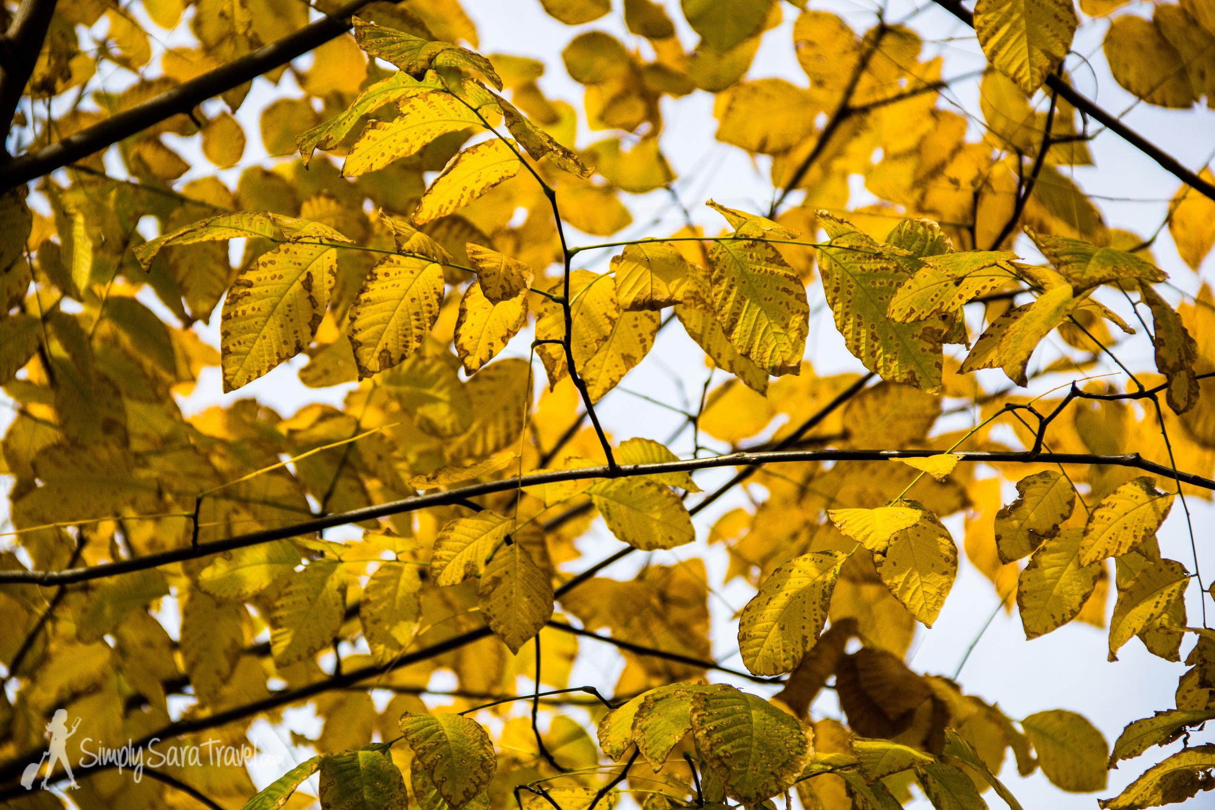Autumn leaves in Paris