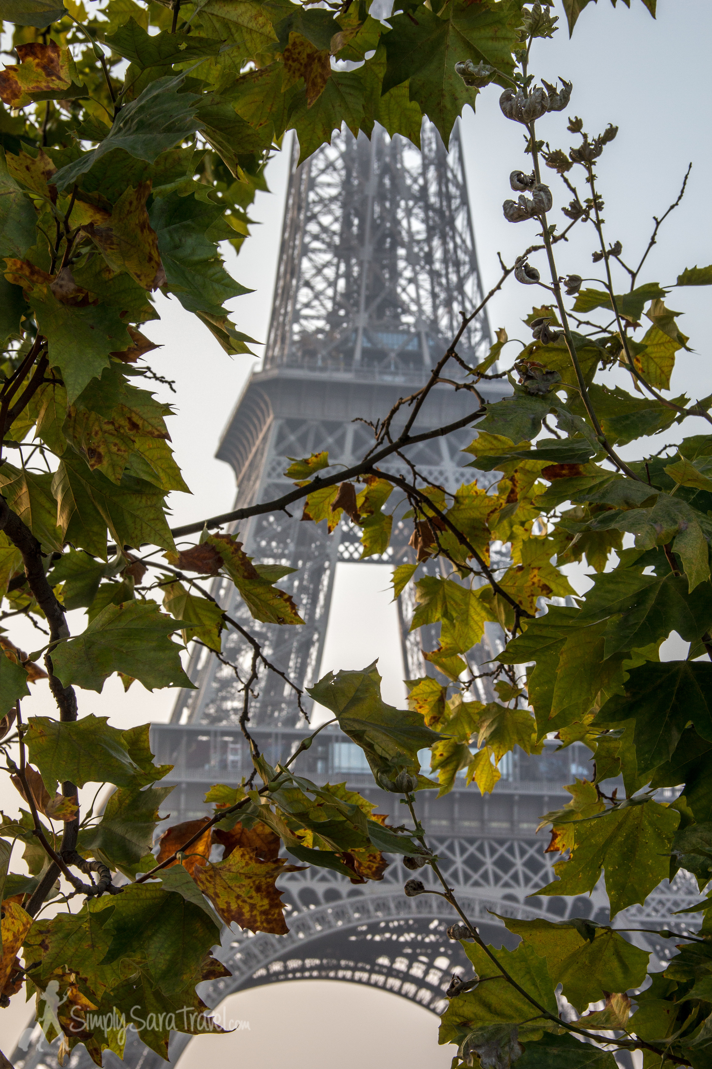 Eiffel Tower with leaves in front of it, Paris, France