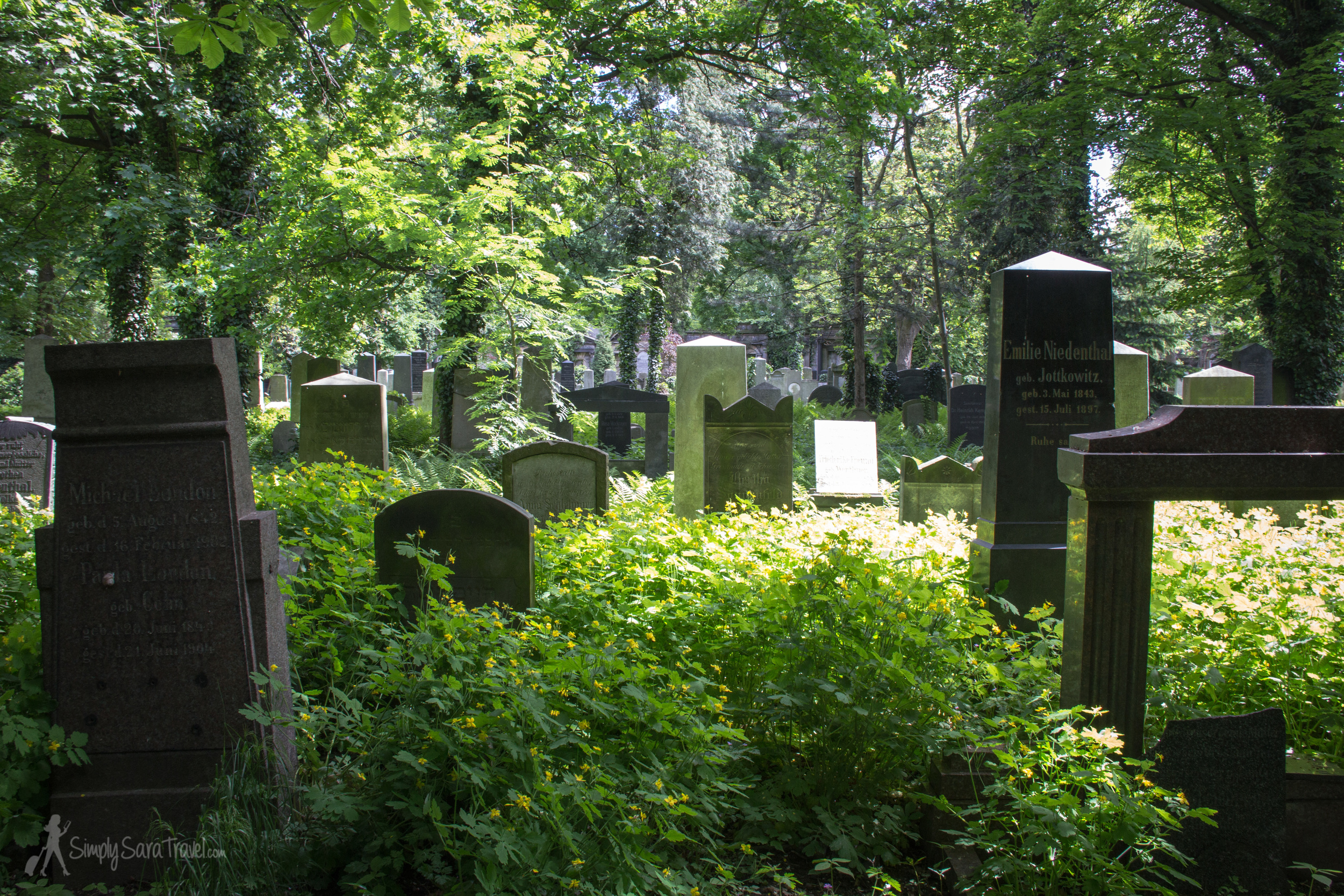 The overgrown Old Jewish Cemetery in Wroclaw, Poland with trees and tombstones