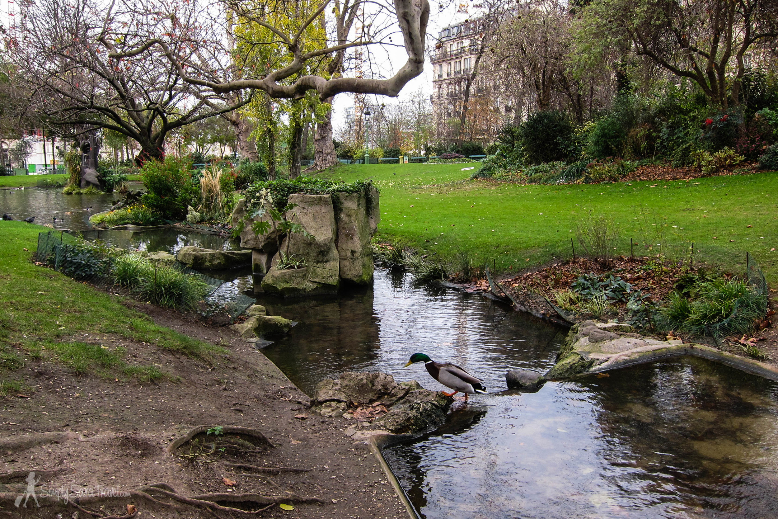 Ducks in Square des Batignolles, Paris, France, 17 arrondissement