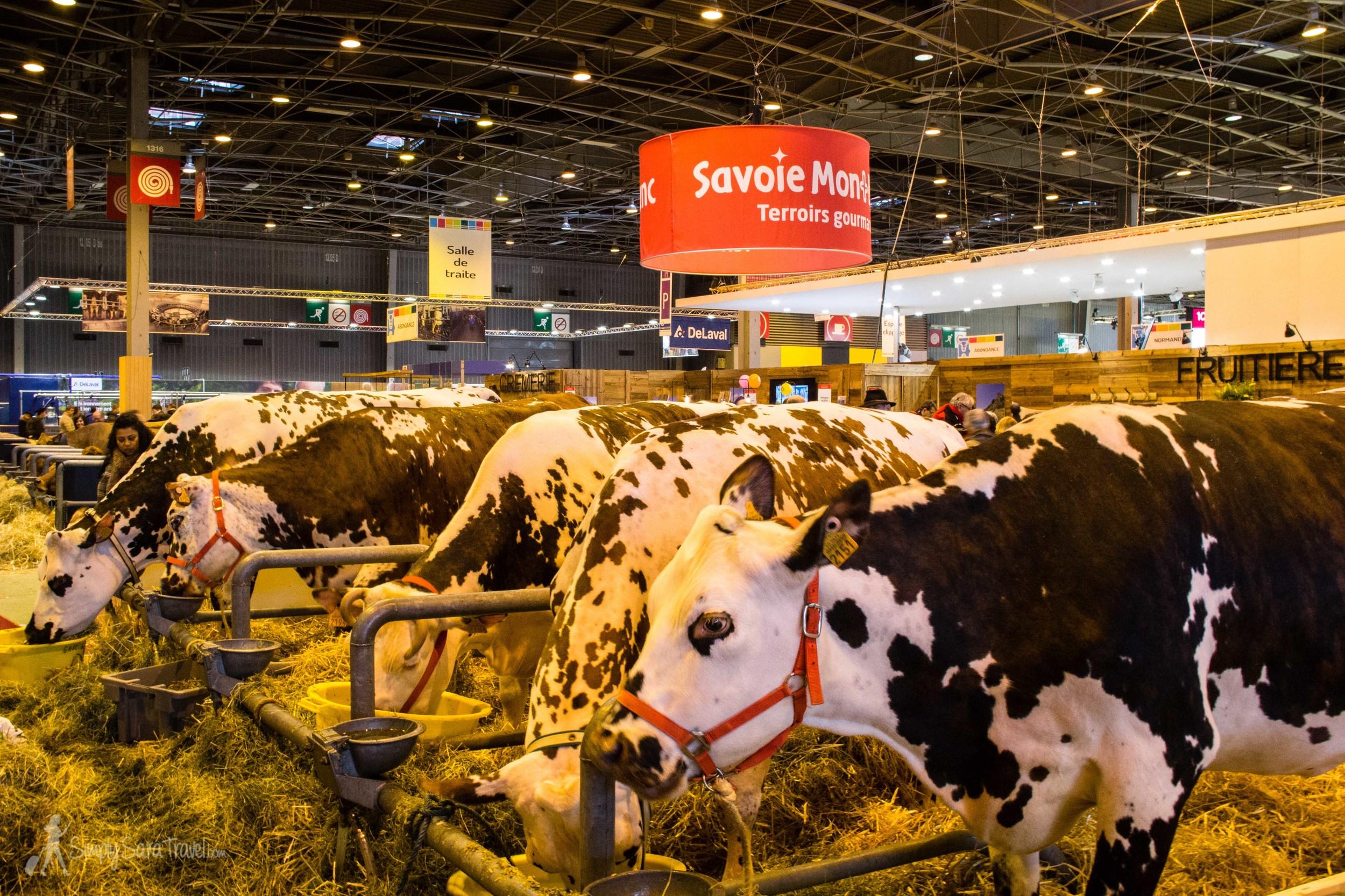 Many cows at the Salon International de l'Agriculture (International Agricultural Show) from Savoie, Paris, France
