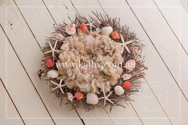 Sea Shells_29.jpg