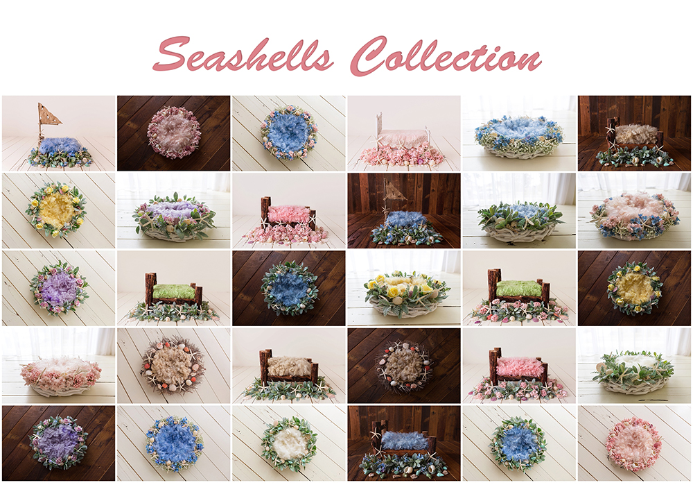 Seashells Collection.jpg