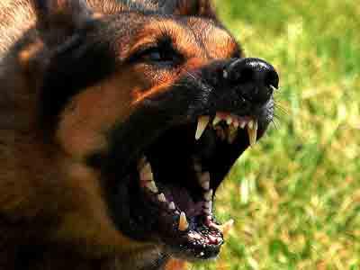 angry-dog008.jpg