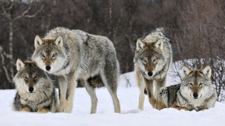 The Wolves Are Waiting