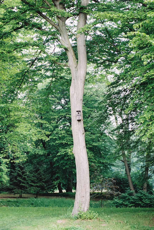 Baum im Park Rittergut Nustrow