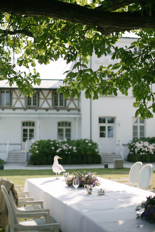 Möwe Seagull Hochzeit Wedding Grand Hotel Heiligendamm