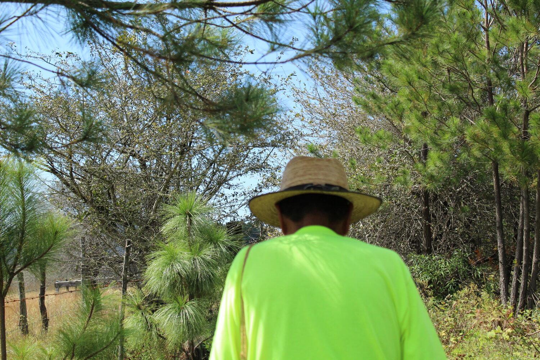 Michoacán cuenta con importantes pineras que se ven constantemente amenazadas por talamontes ilegales.