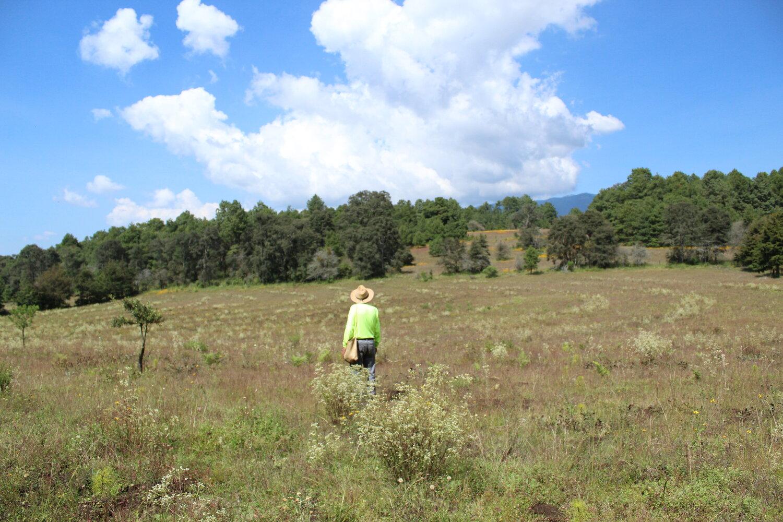 Andrés Valentines rodeado de los últimos árboles plantados con recurso de la Conafor.