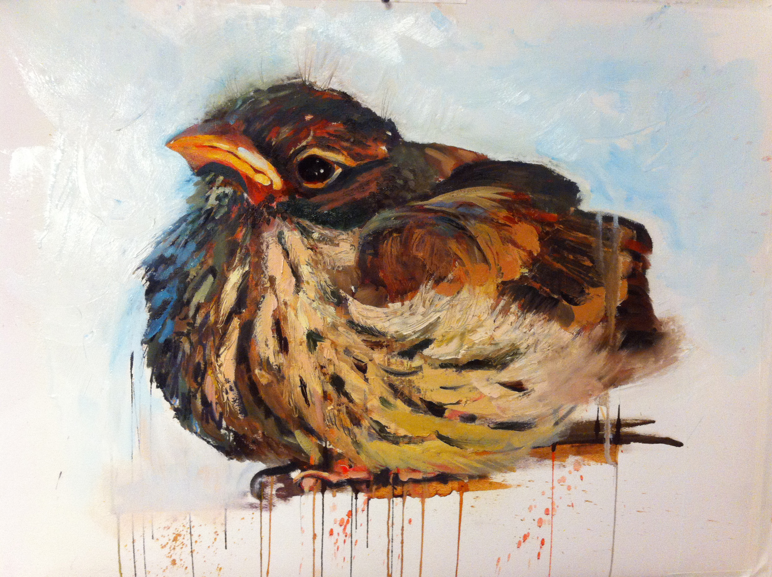 Bird_timorousbeastie2.jpg