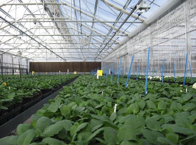 Modern Horticulture.jpg