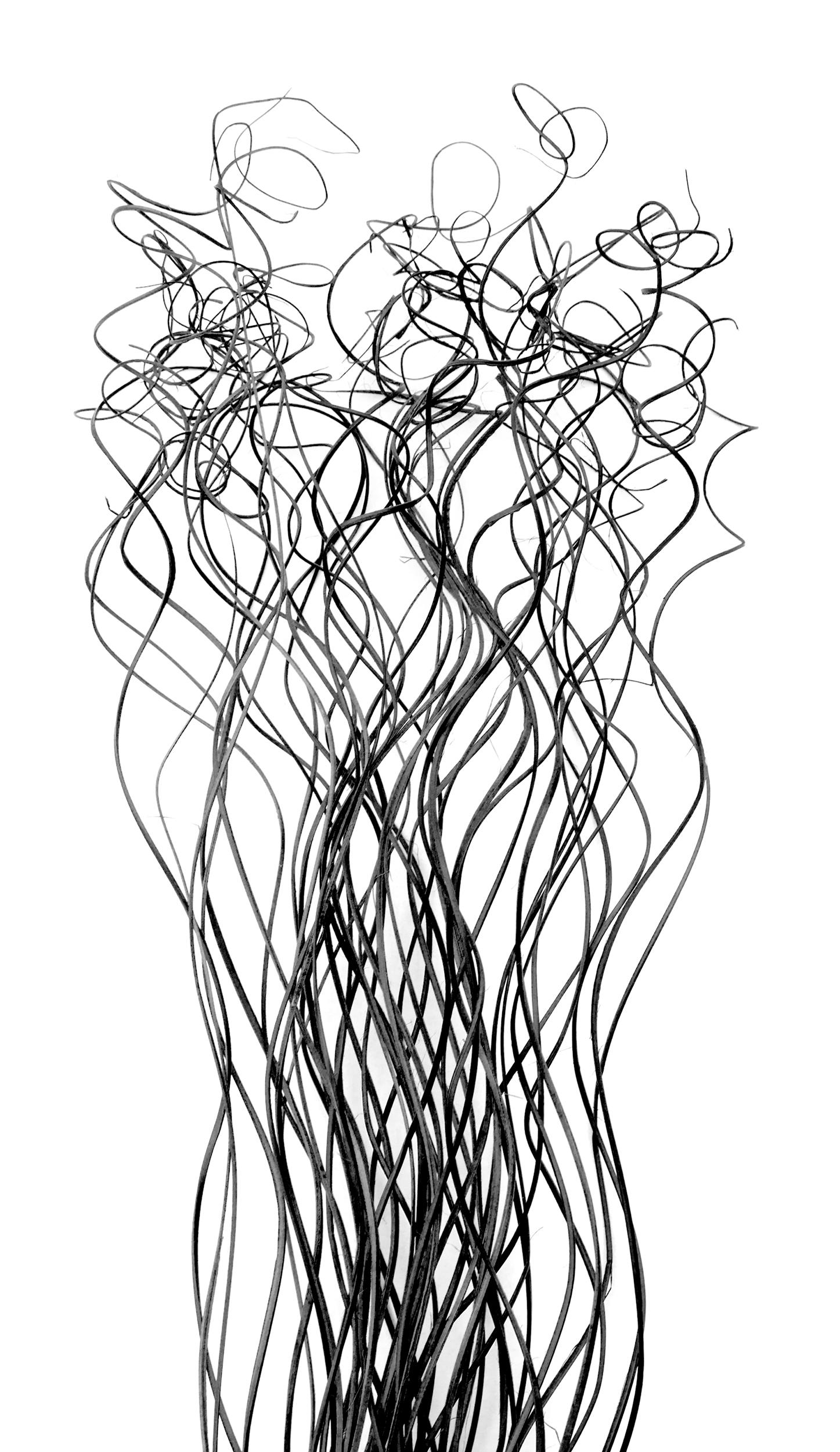 Siskind-Plant.jpg