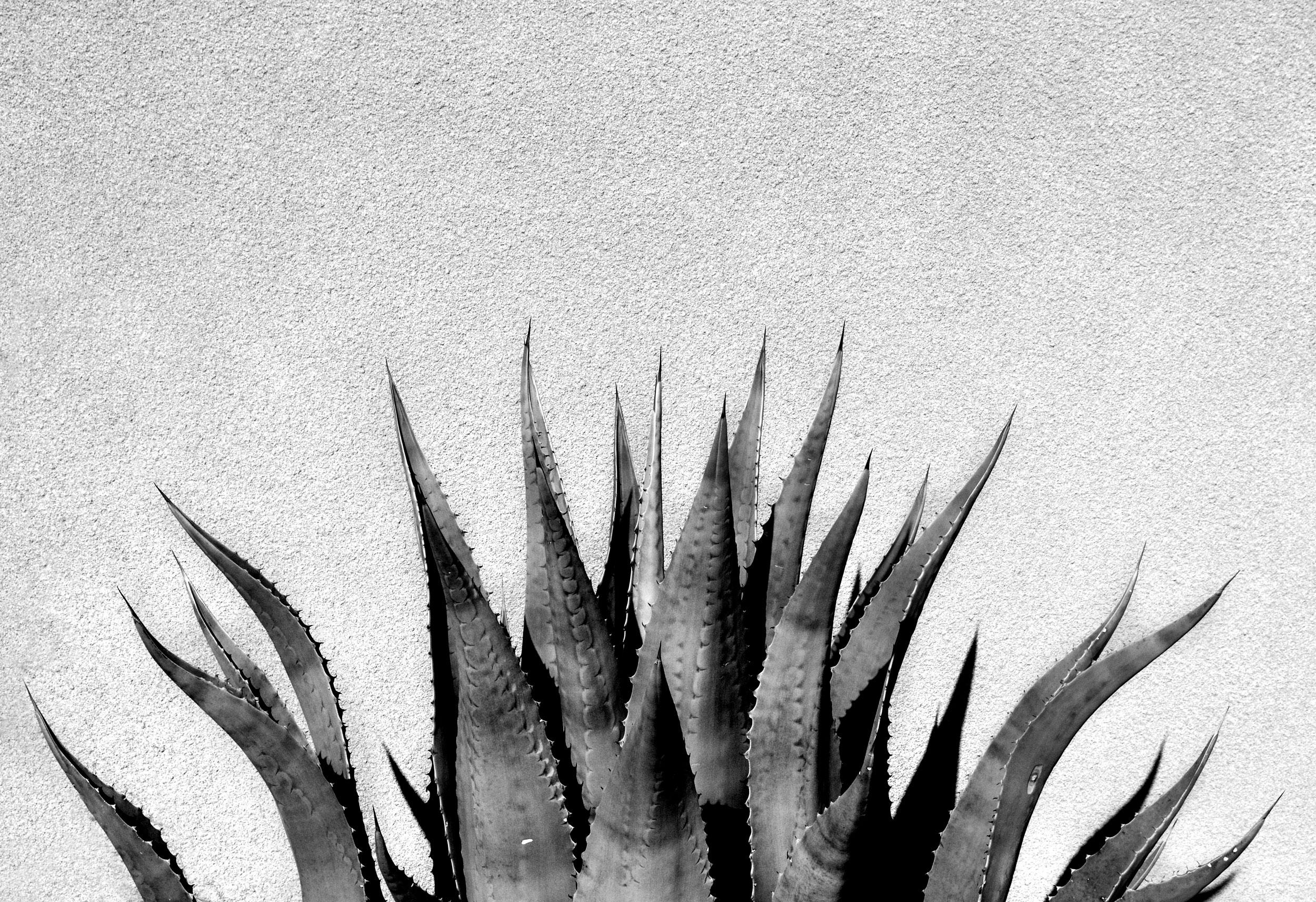 Summer-Big-Cactus.jpg