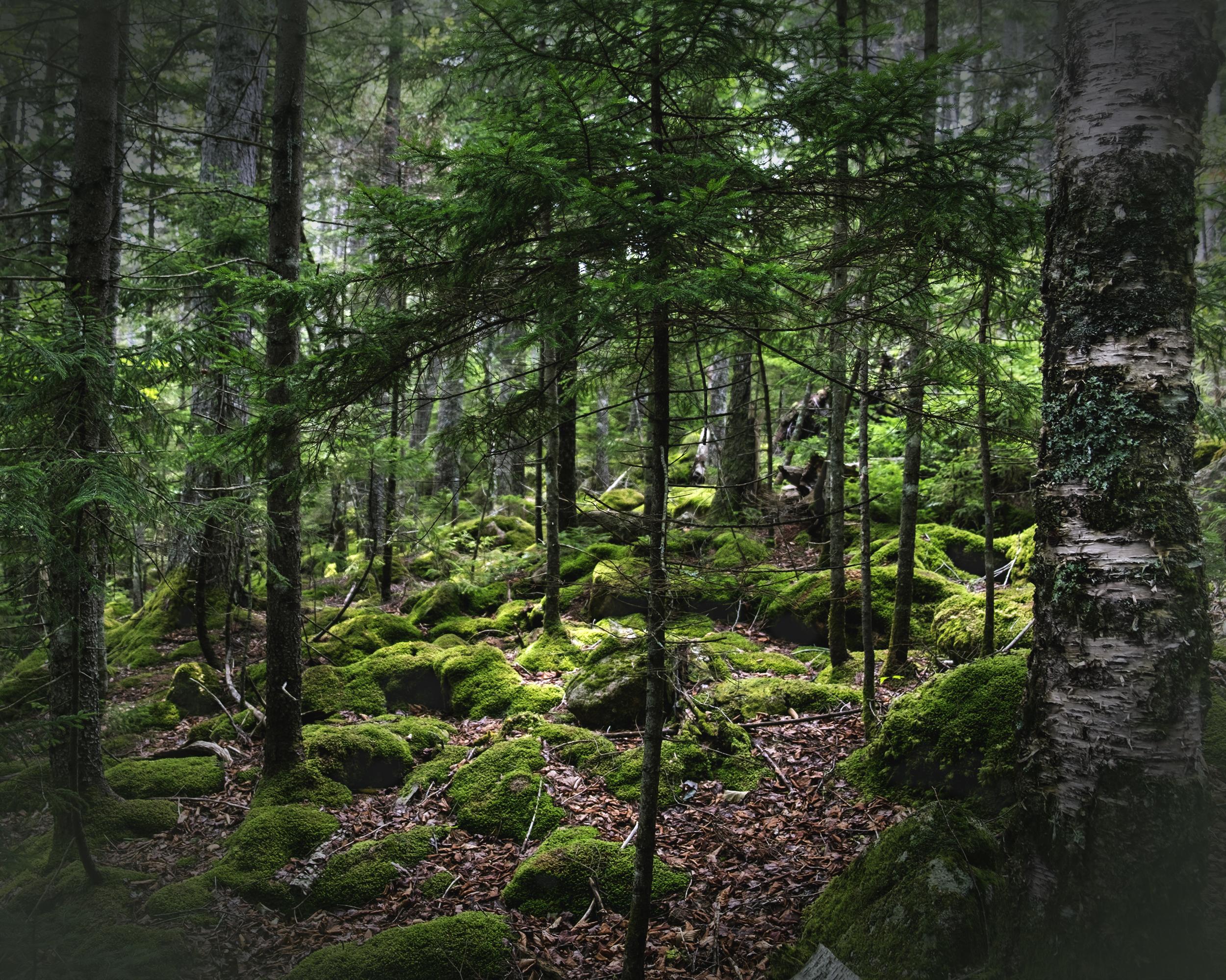 Moss Land for Website.jpg