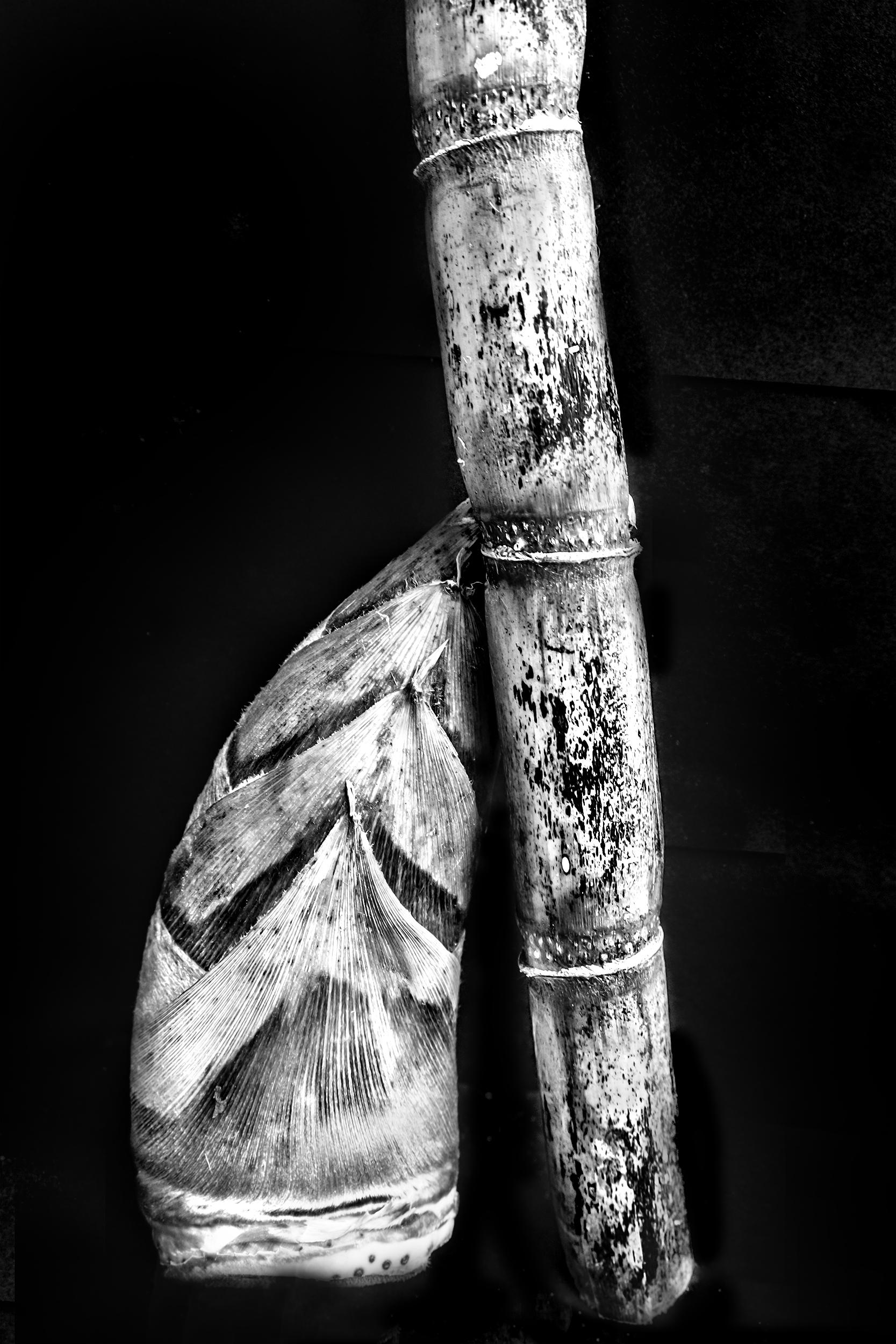 Sugarcane for Website.jpg