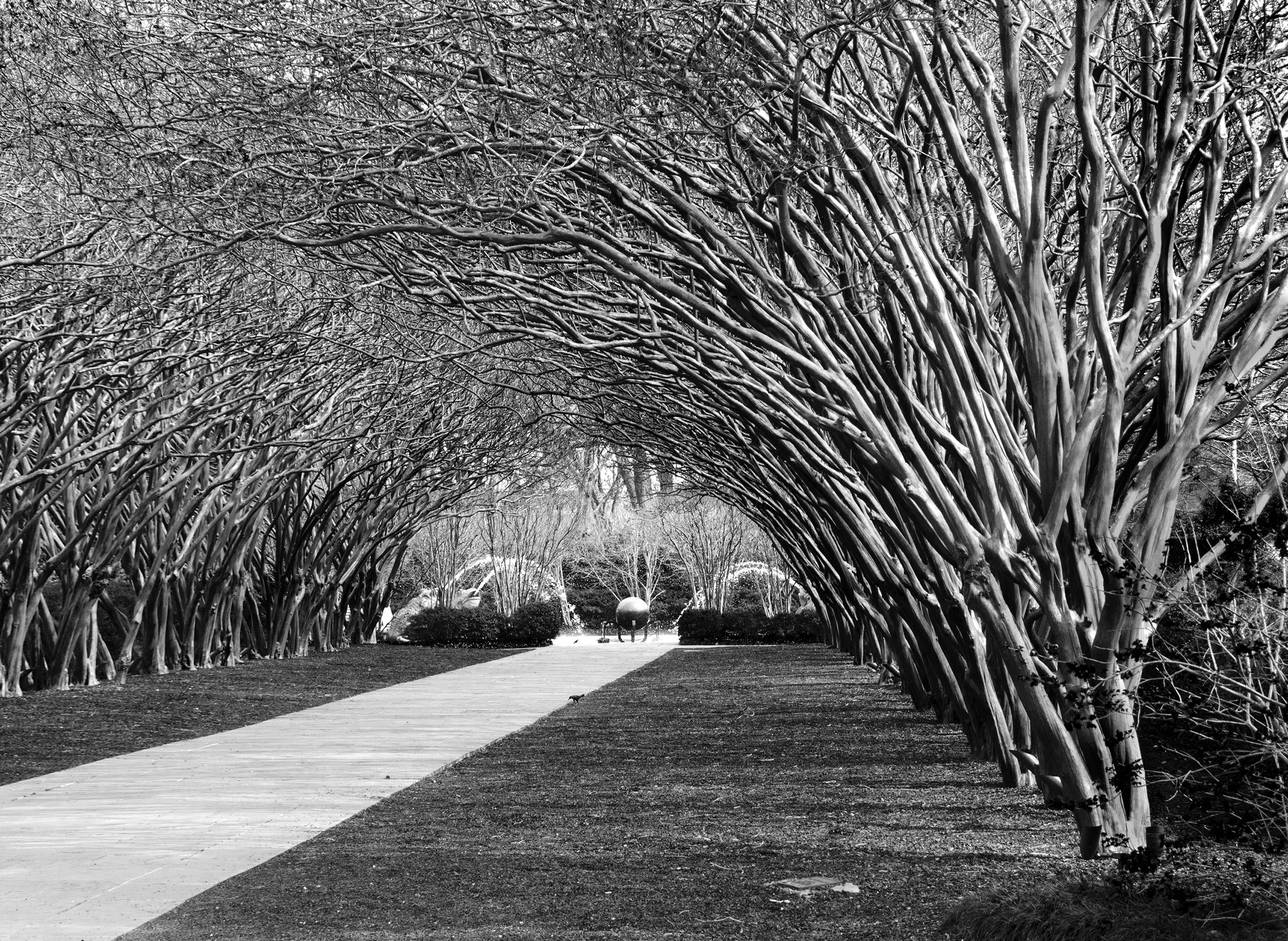 trees arboritoum.jpg