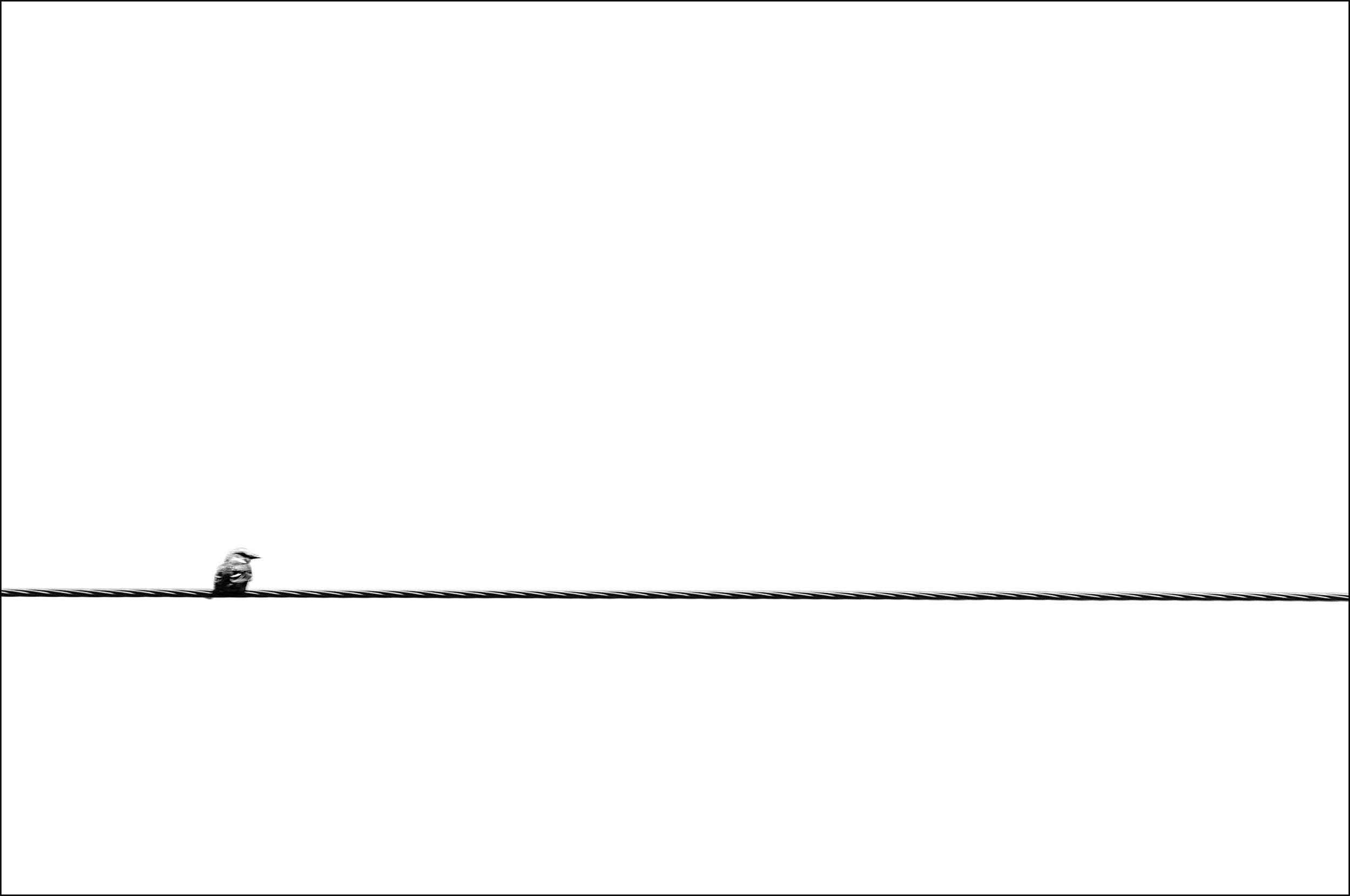 Bird Wire Sharpened.jpg