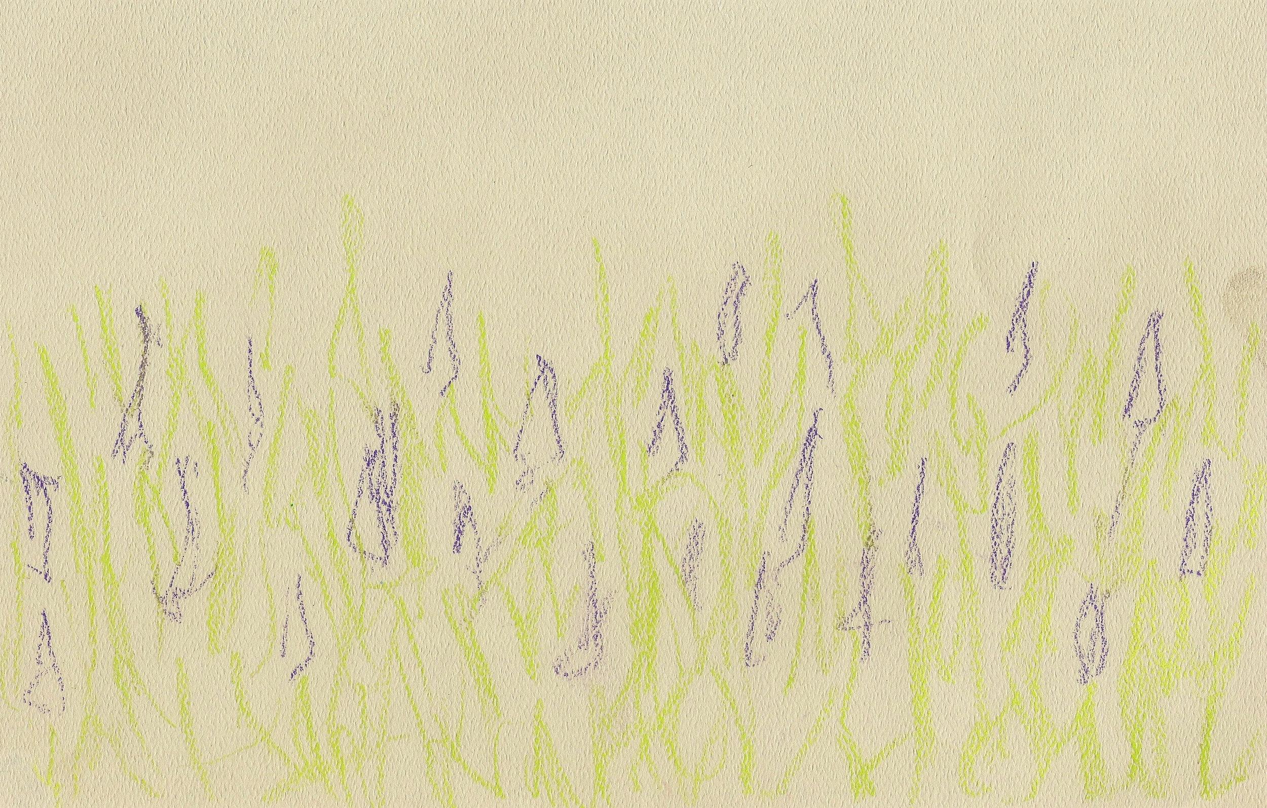 Lavender .jpeg