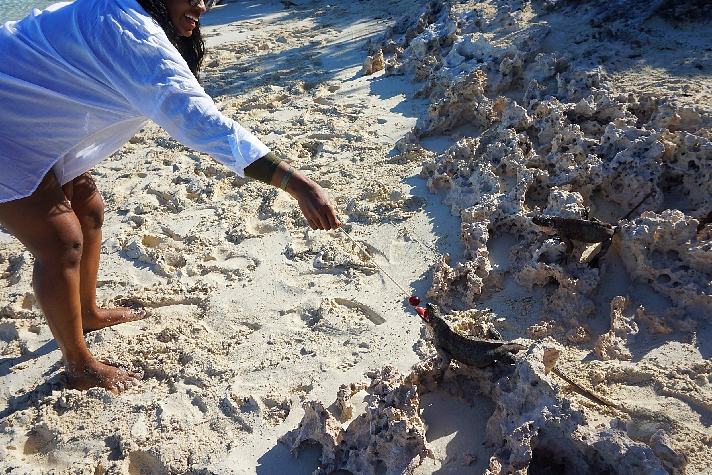 business babes iguanas bahamas