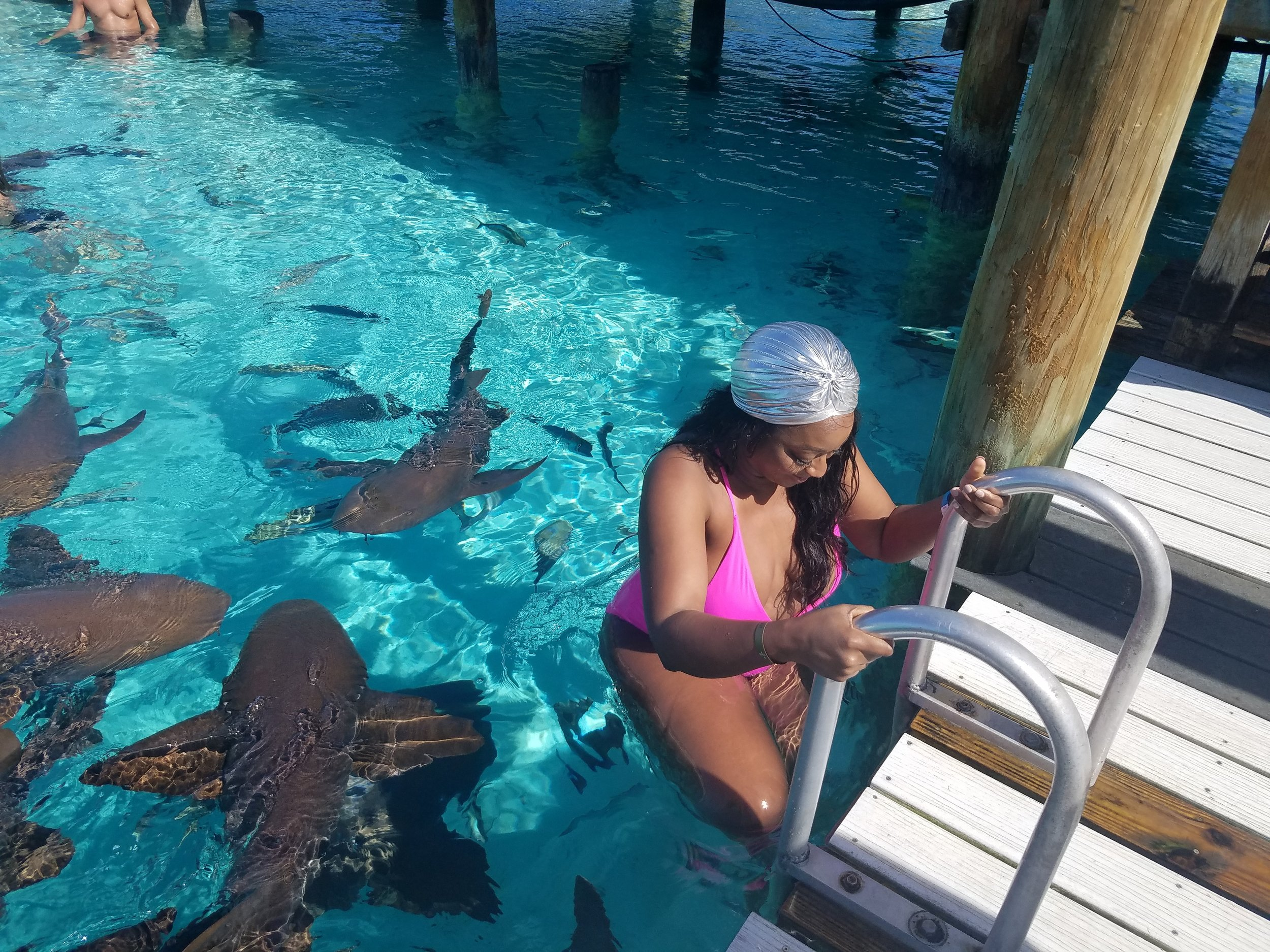 business babes sharks
