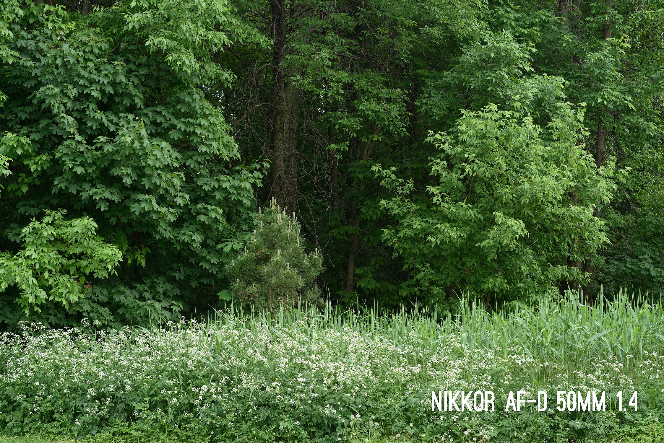 afd14.jpg