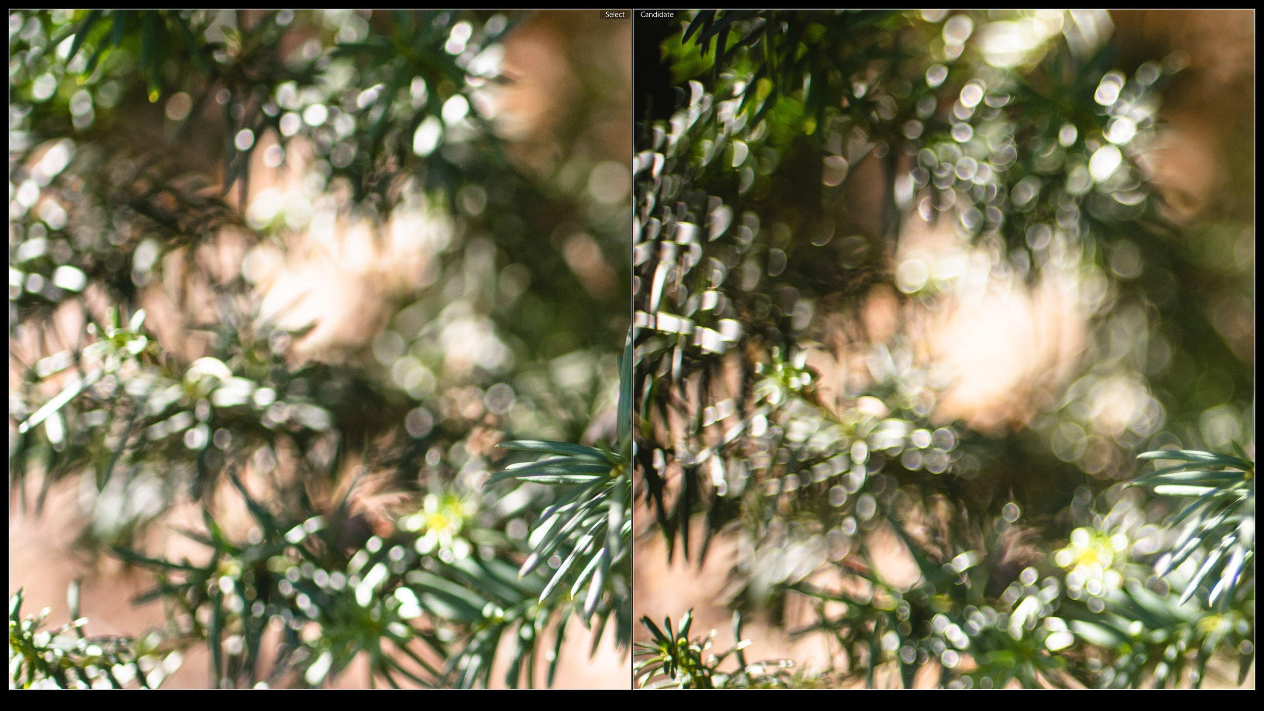 Despite slight onioning, Tamron 45VC (left) is still cleaner and smoother than the harsh soap bubble bokeh of the Nikkor AF 50mm 1.4D (right)