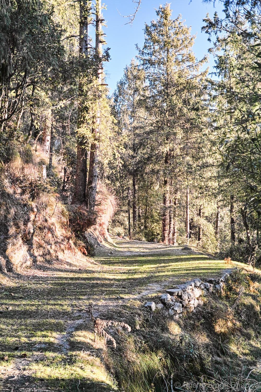 forest trail - Chowari Jot