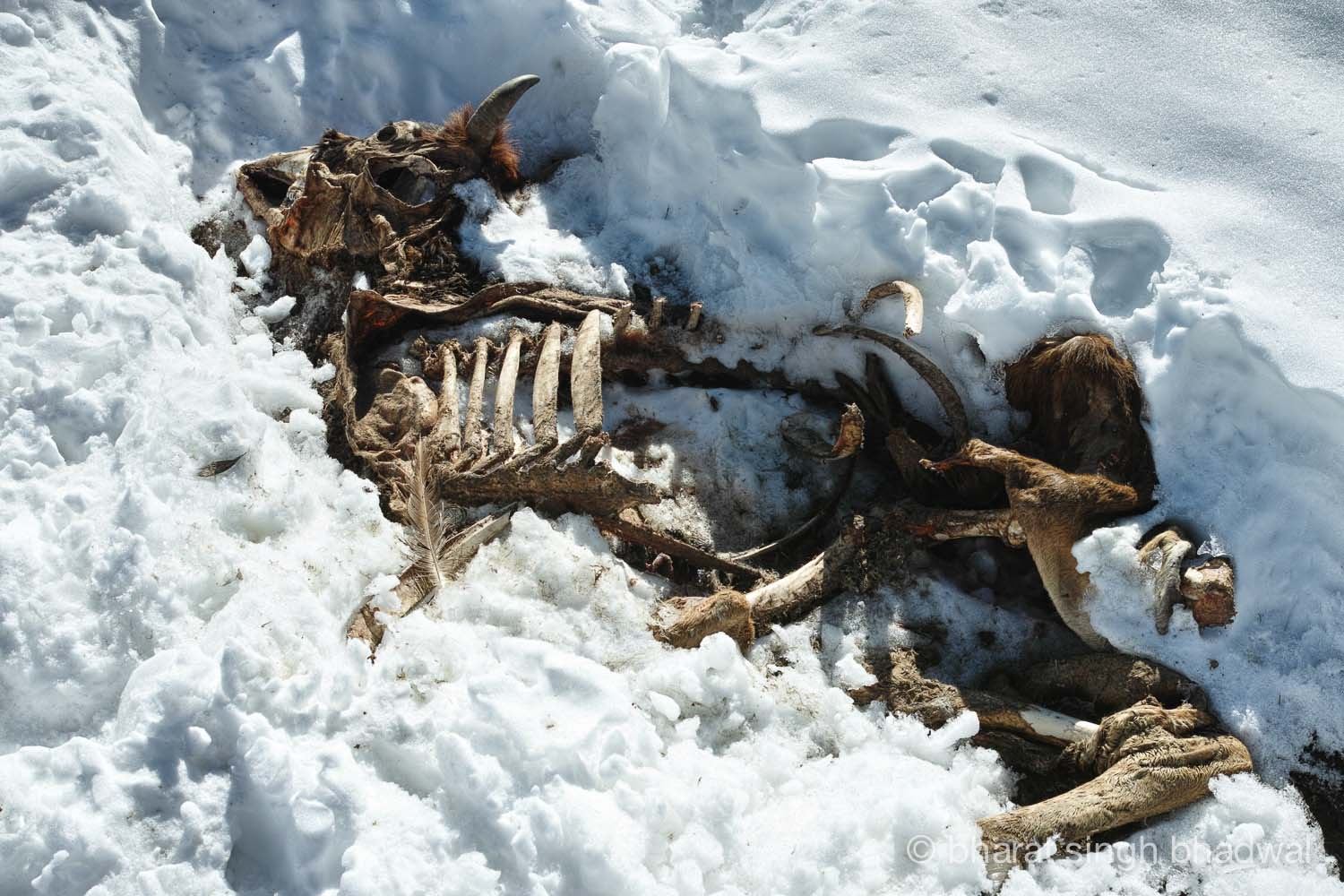 A grim reminder of things going wrong on a winter trek