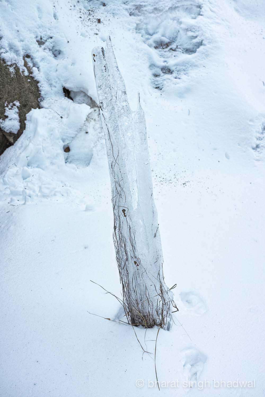 Flora encased in its snowy sheath.