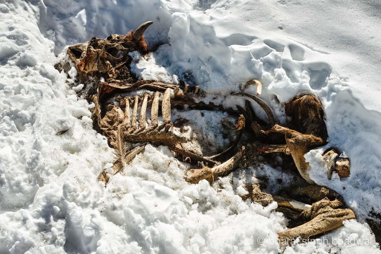 Fair warning for an unprepared winter trekker