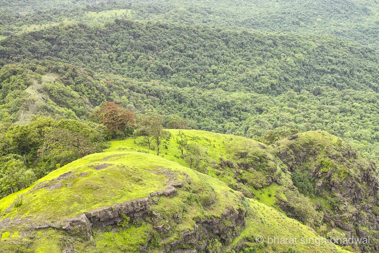 Karnala bird sanctuary forest