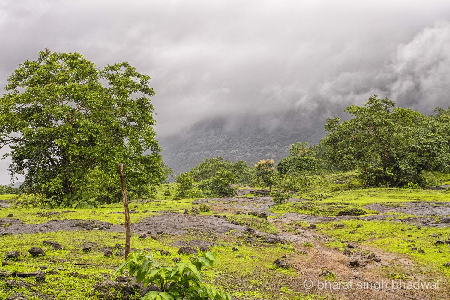 North end of the plateau. Bhimashankar's walls emerging from the mist