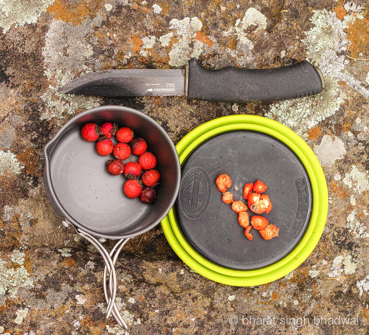 Chopping rose hips on a Sea to Summit bowl that doubles as a chopping board. Very Handy.