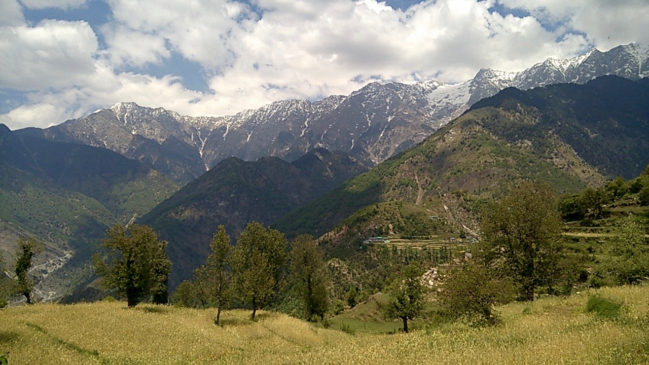 Golden fields in Naddi village framed by Dhauladhar mountains