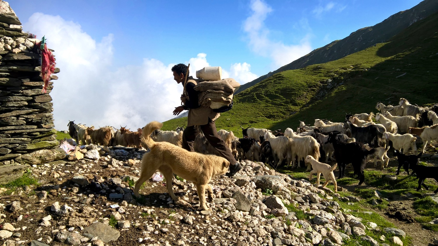 Jalsu Pass in its natural element with Gaddi, sheep, goats and a fluffy dog