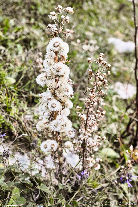 Jalsu Pass Flower Valley Himachal 4.jpg
