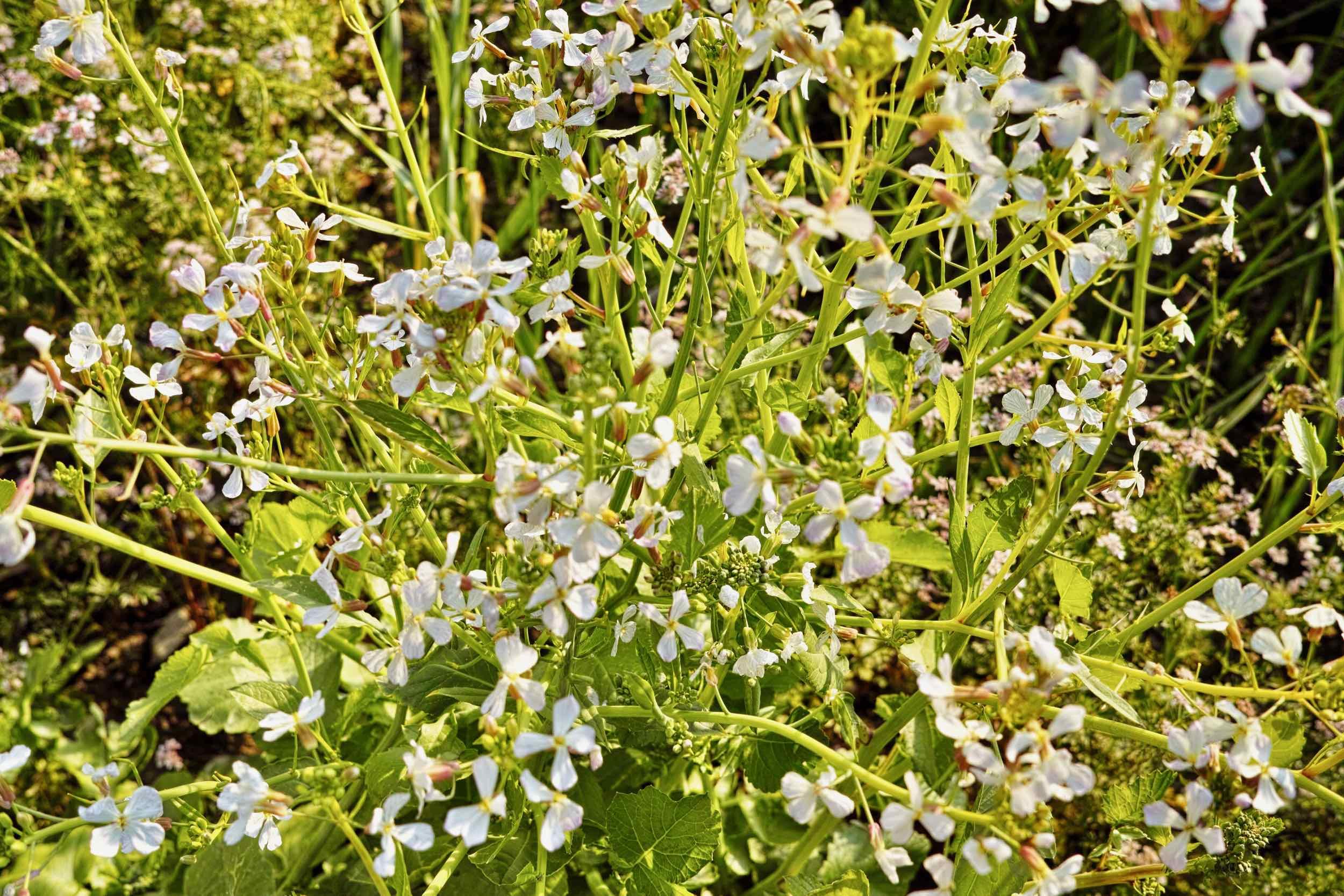 Wild flowers en route to Pantwari