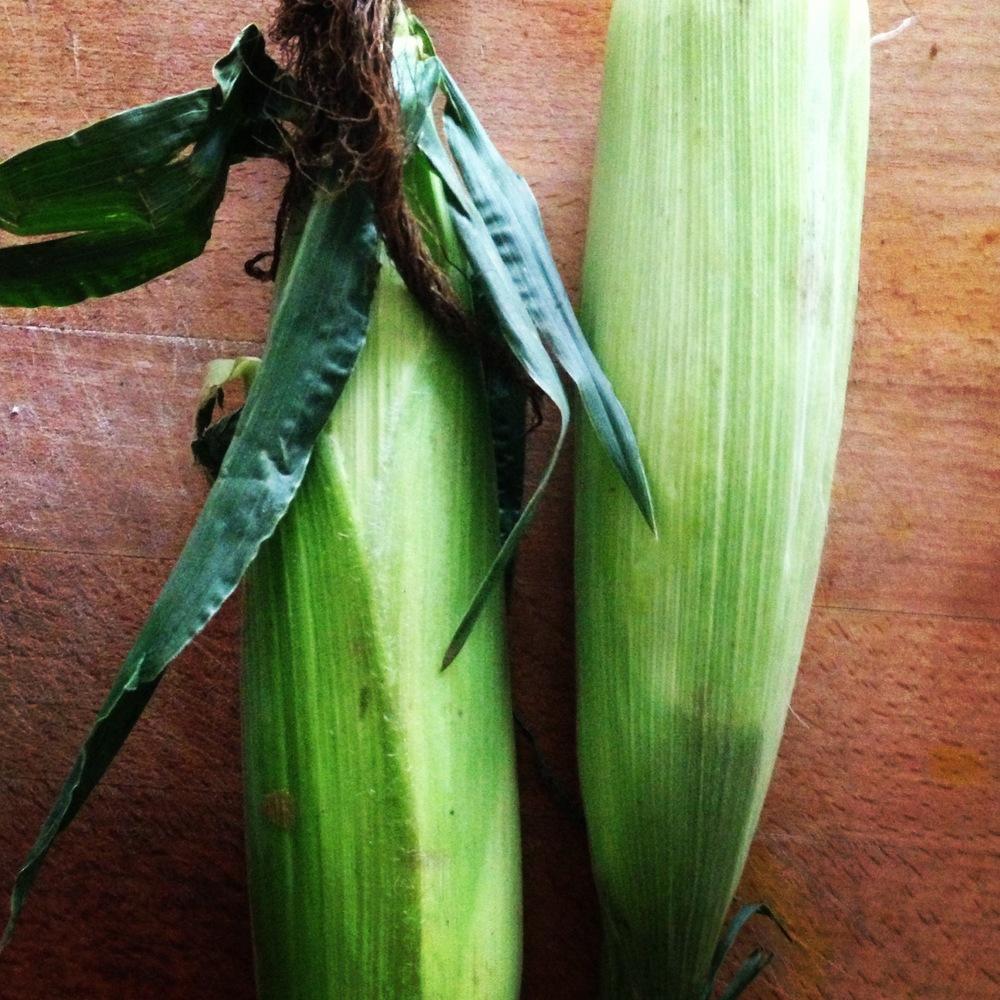 corn2.jpeg