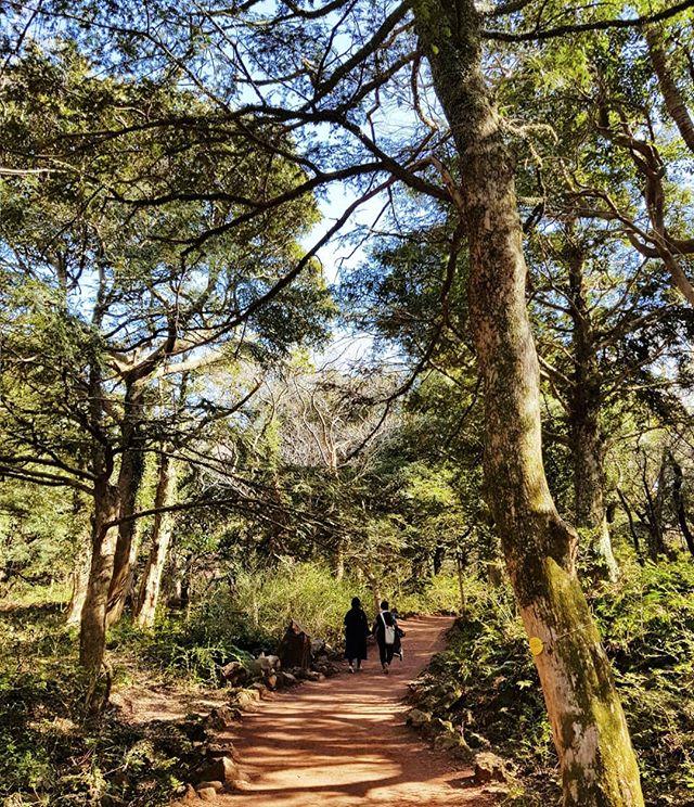 A walk in the park. #jejuisland #Southkorea #🇰🇷 📸#samsungs8plus #samsungsg